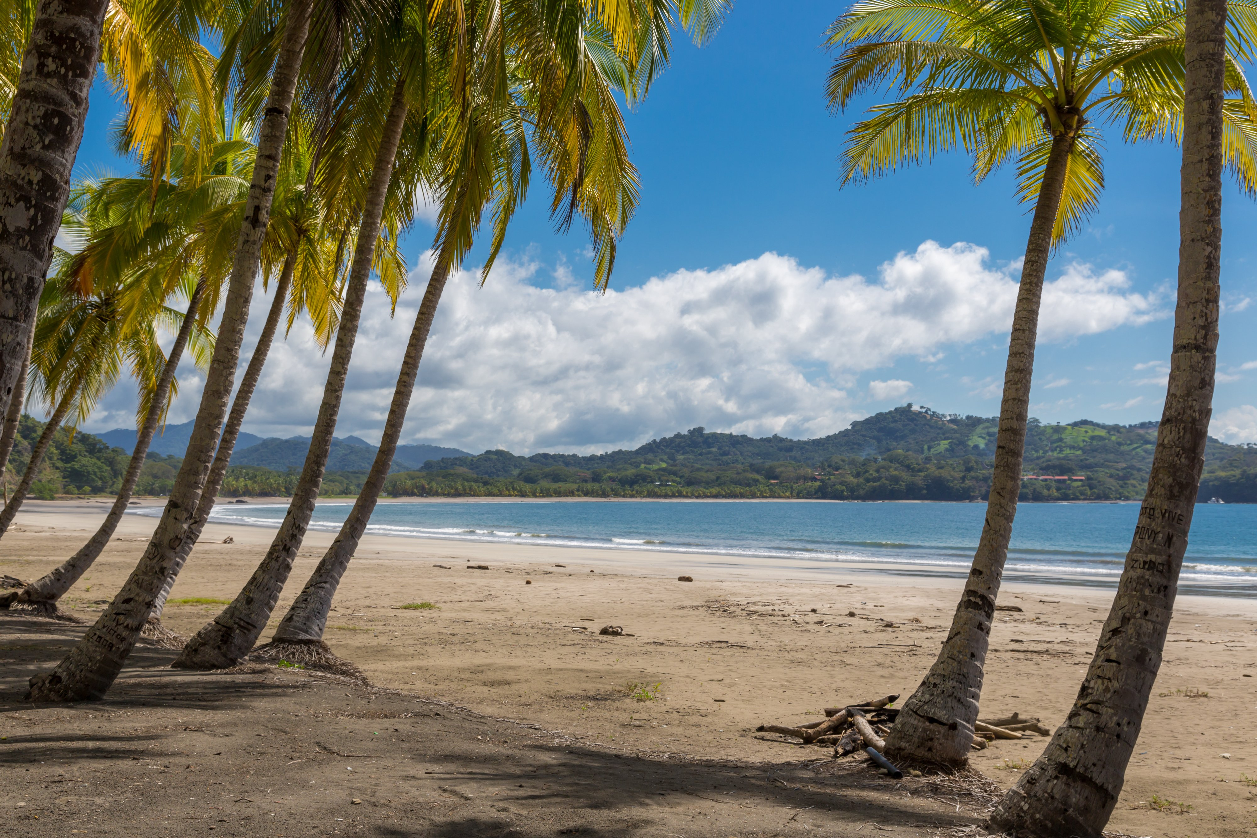 Tamarindo beach with palm trees