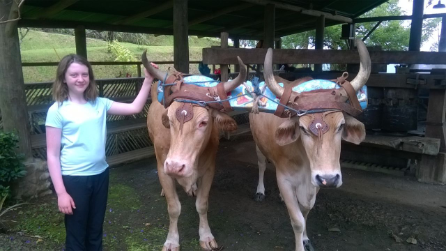 Student with Oxen